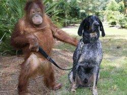3 Adımda Köpek Fobisini Yenin